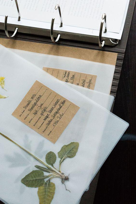 Plant Identification Template Herbarium Vorlage Vorlagen 12