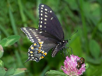 Landscaping for Butterflies and Other Pollinators