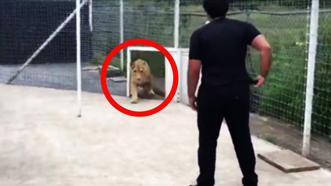 Diese Löwin trifft auf den Mann, der ihr einst das Leben