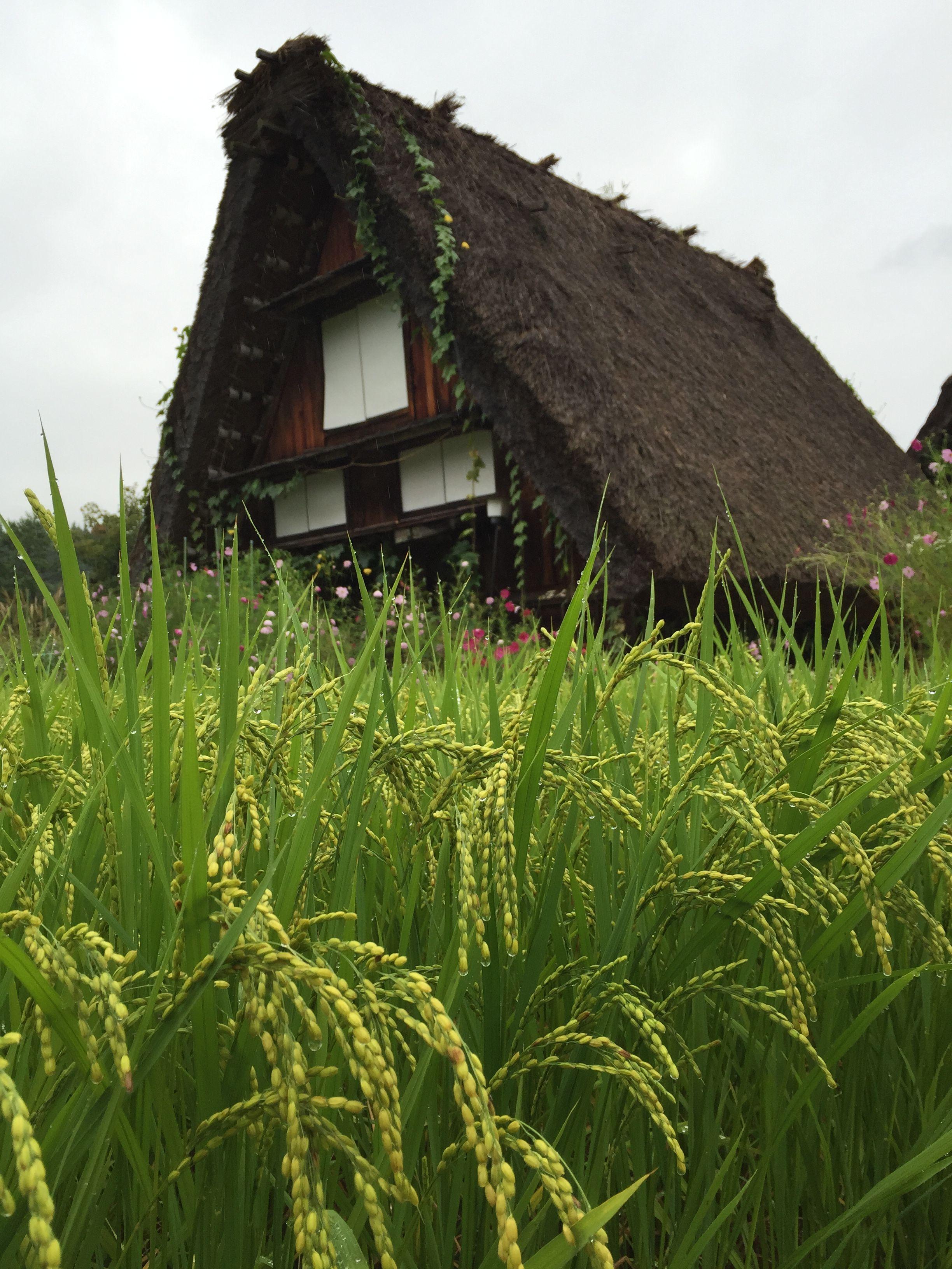 Case di paglia, Shirakawa-go