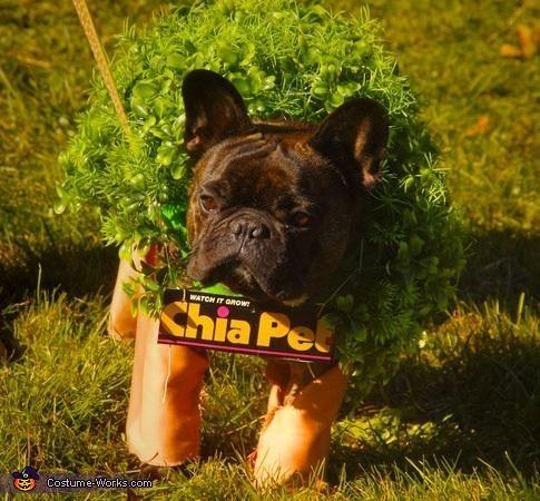 chia pet costume halloween costume contesthalloween - Pet Halloween Photo Contest