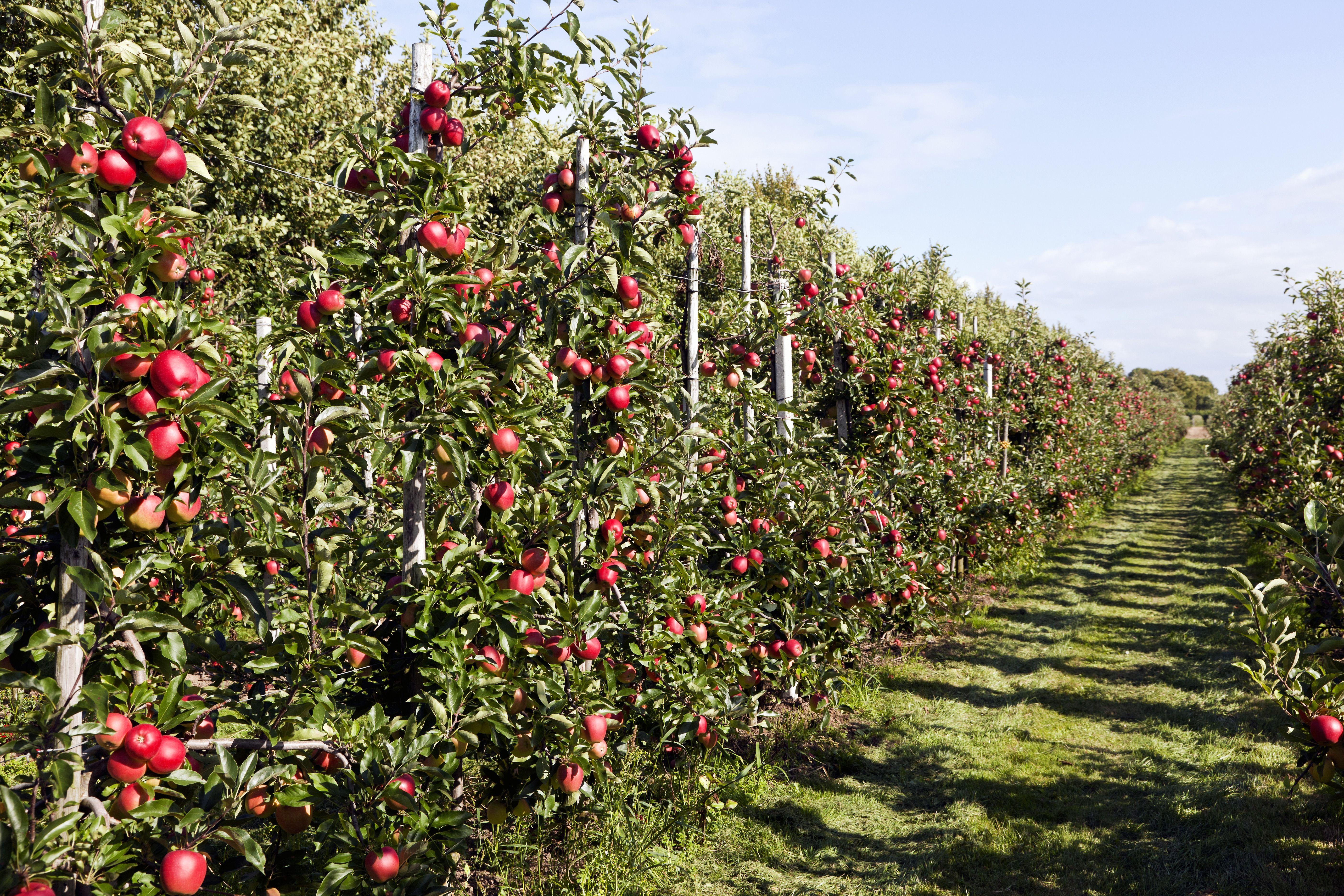 Comment Planter Un Arbre Fruitier conseils pour planter un arbre fruitier | planter des arbres