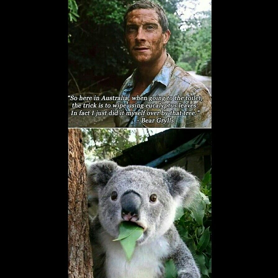 Not Cool, Bear hilarious funny funnypicture awesome