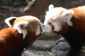 Resultado de imagem para Quero saber se animais beijam e quais?