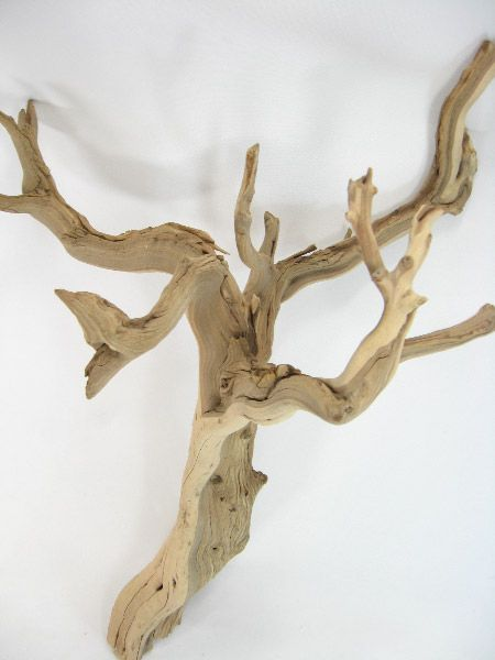 42+ Huge pieces of driftwood inspirations
