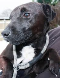 Patterdale Terrier Staffy Cross Patterdale Terrier Cute Animals Dogs