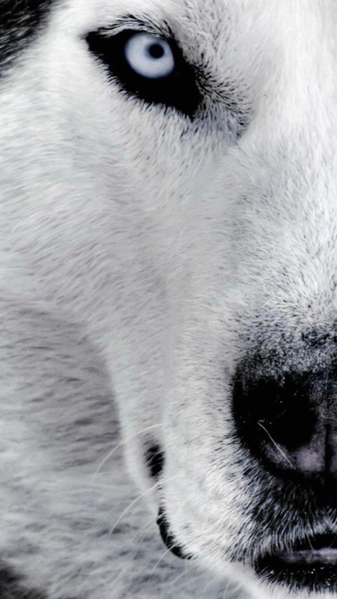 Wallpaper Full Hd 1080 X 1920 Smartphone Dog Husky Husky Siberian Husky Wolf Face
