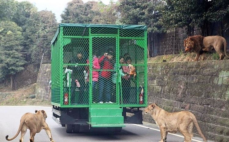 This Zoo In China Locks People In Cages Instead Of Animals ...