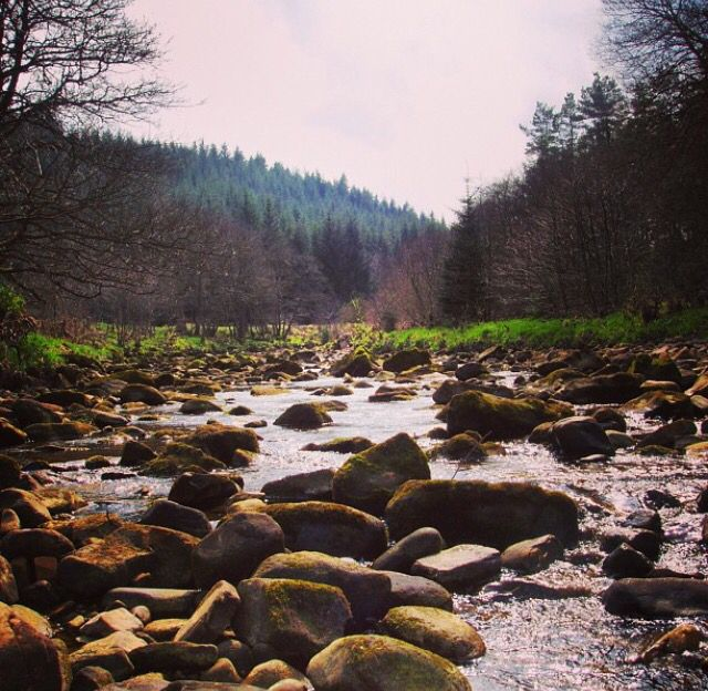 Kielder Forest, Northumberland