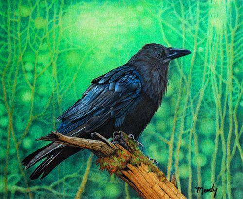 "Download ""Raven"" - by Cirocco Moody, colored pencil   Color pencil art, Bird art, Raven art"