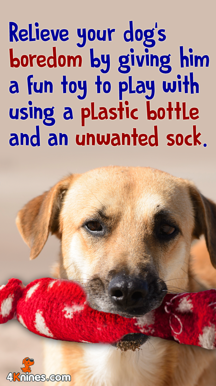 Here's how to make the toy:  Simply remove the plastic cap and ring from the bottle, place the bottle inside the sock, then tie off the end. Your dog will love gnawing on his new toy!