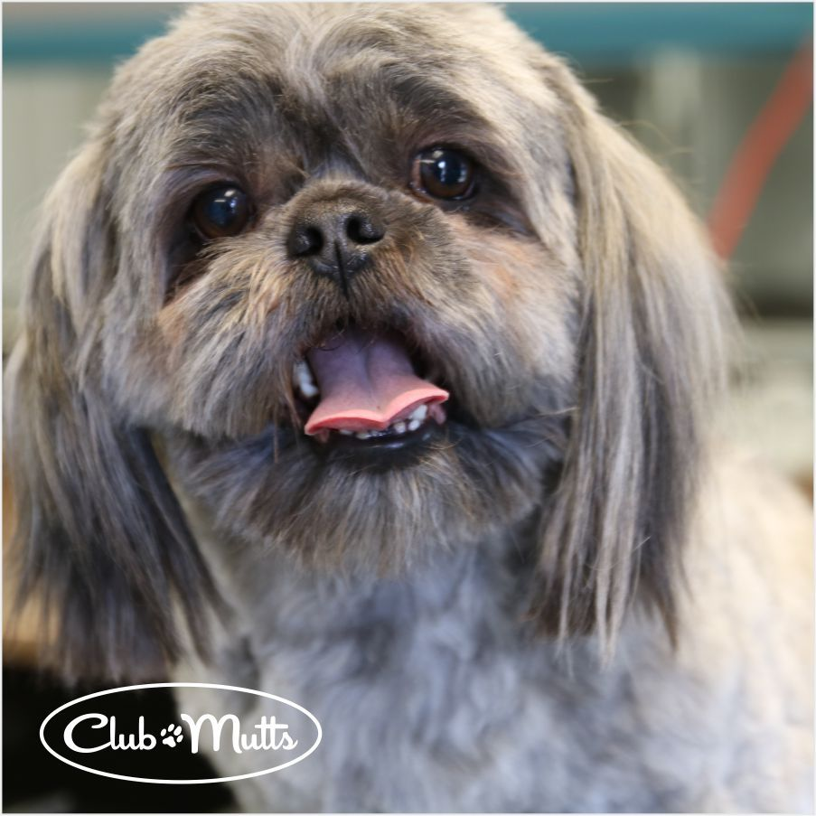 One pampered pooch = one happy camper! clubmutts
