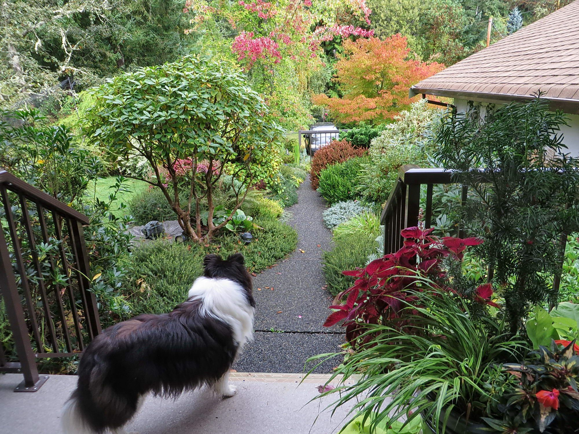 fall in mays garden on vancouver island fine gardening - Garden Sheds Vancouver Island