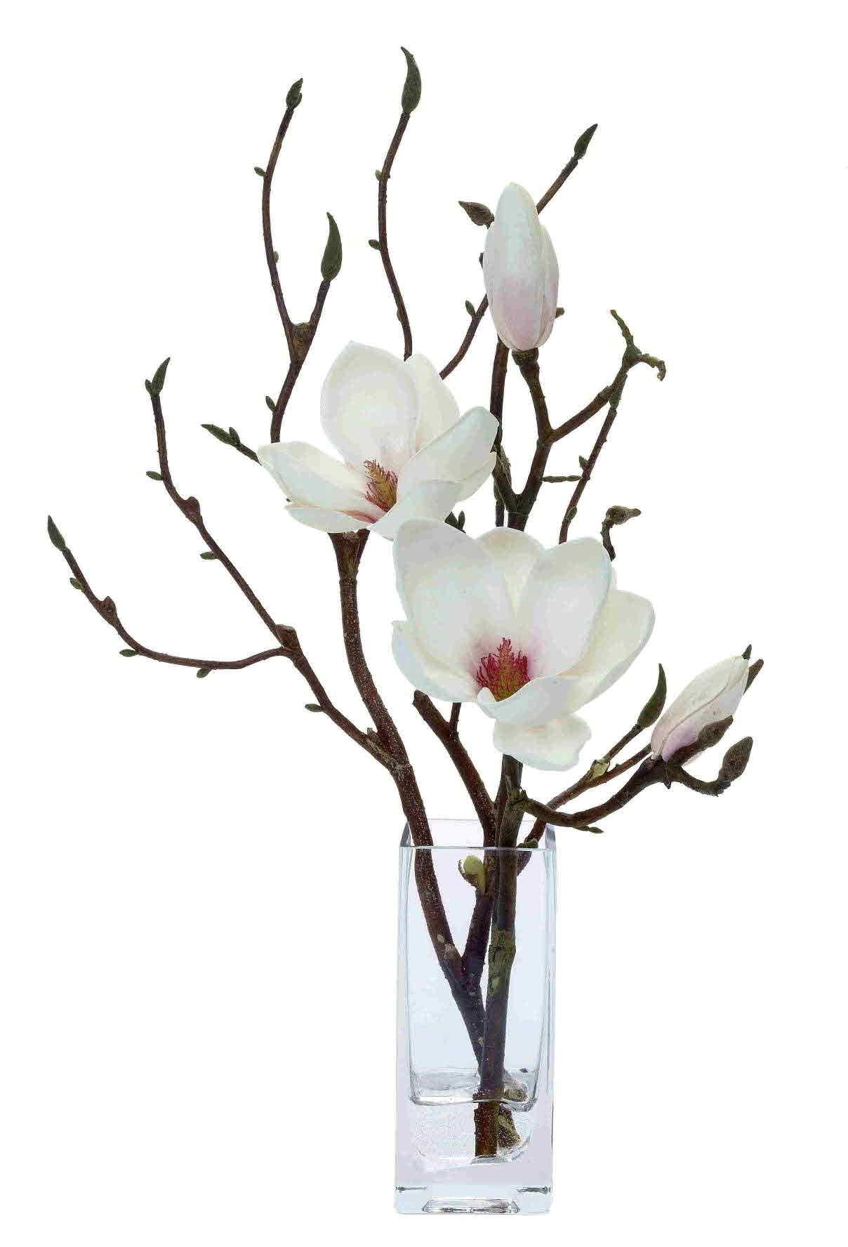 Magnolia branches gardening pinterest magnolia flowers and magnolia branches mightylinksfo Choice Image