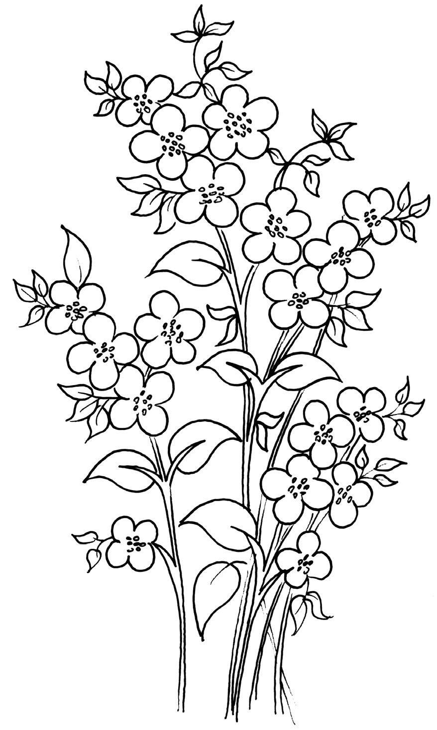 Coloriage Fleur Myosotis.Myosotis Pochoir Hand Embroidery Patterns Painting Templates Et