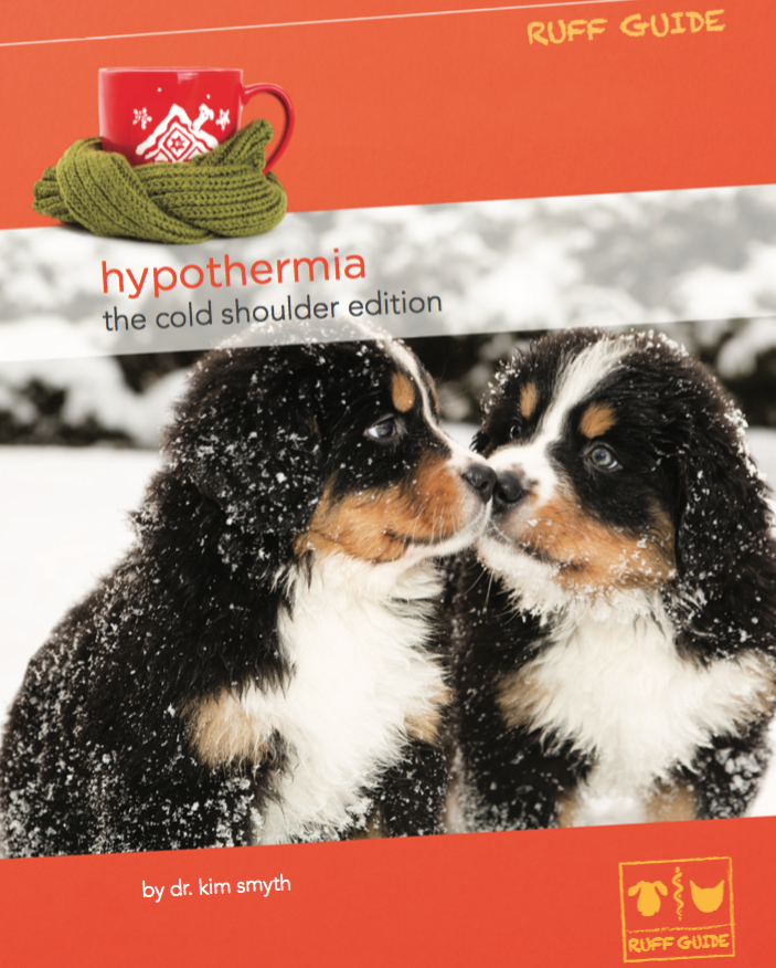 How Cold Is Too Cold For Your Dog? Pet insurance reviews
