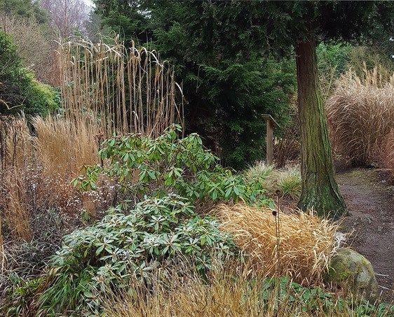 Græsser Som Fokuspunkter I Vinterhalvåret Planteideer