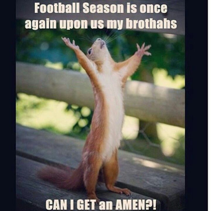 Amen Everyone Loves Football Can T Wait For Spring Some Stress Relief Happy Squirrel Funny Animals Cute Animals