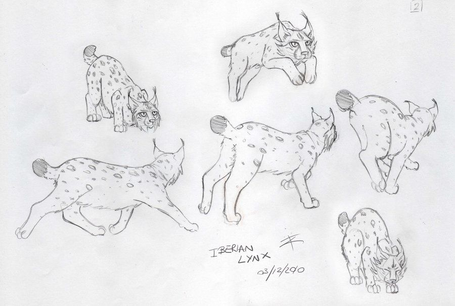 Page 2 of my animal figure/anatomy practice - Hares and Rabbits. I ...