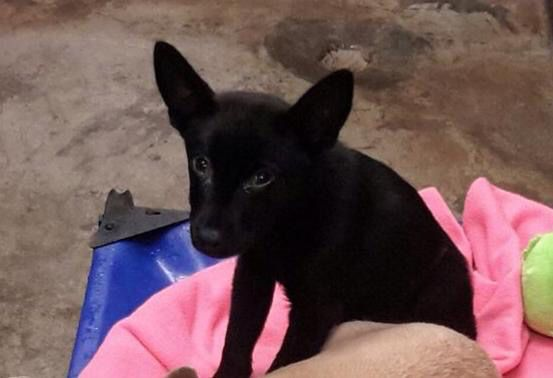 Safe!! Less than 4 months old shepherd mix Located at Odessa Texas Animal Control. If you want to adopt or rescue him, please email us at wagagainrescue@gmail.com or comment me! And we'll get back to you ASAP. 10/23