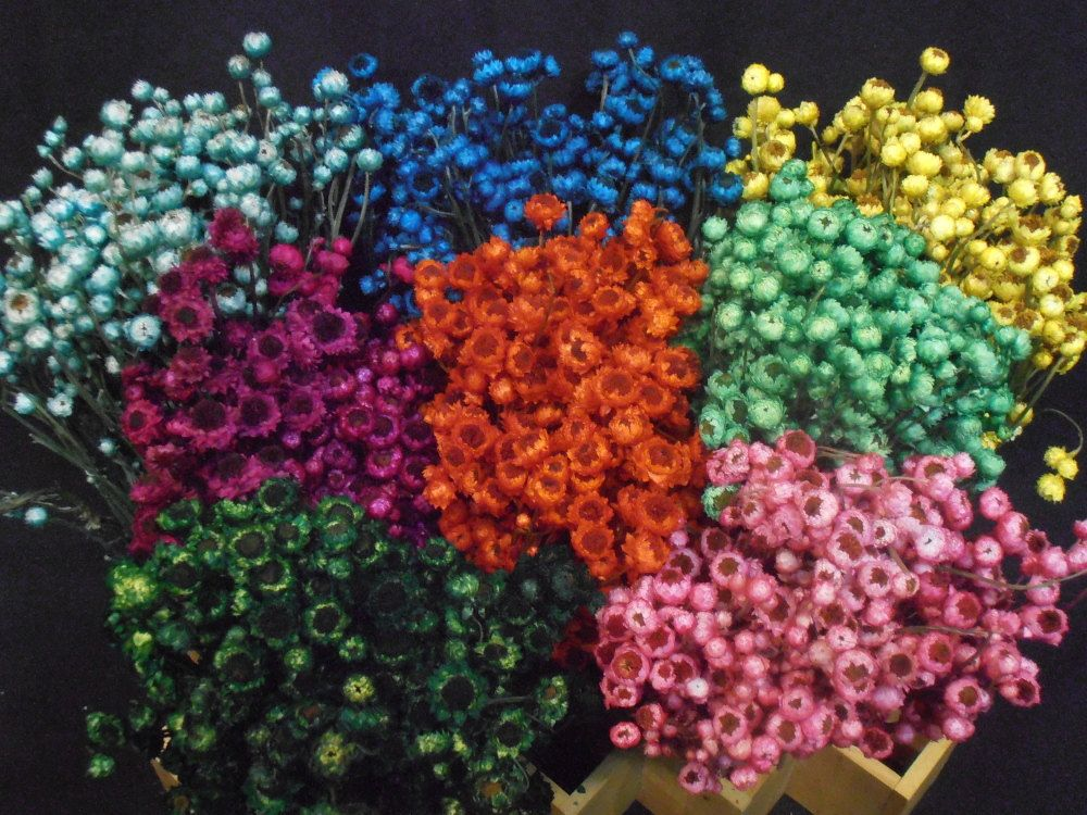 mini dry flowers Google Search Flower farm, Dried