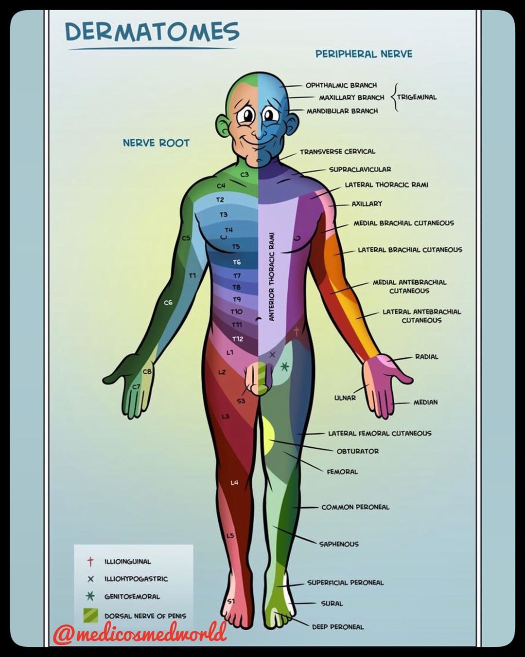 . DERMATOMES☝🏽☝🏽 A dermatome is the area of the skin of ...