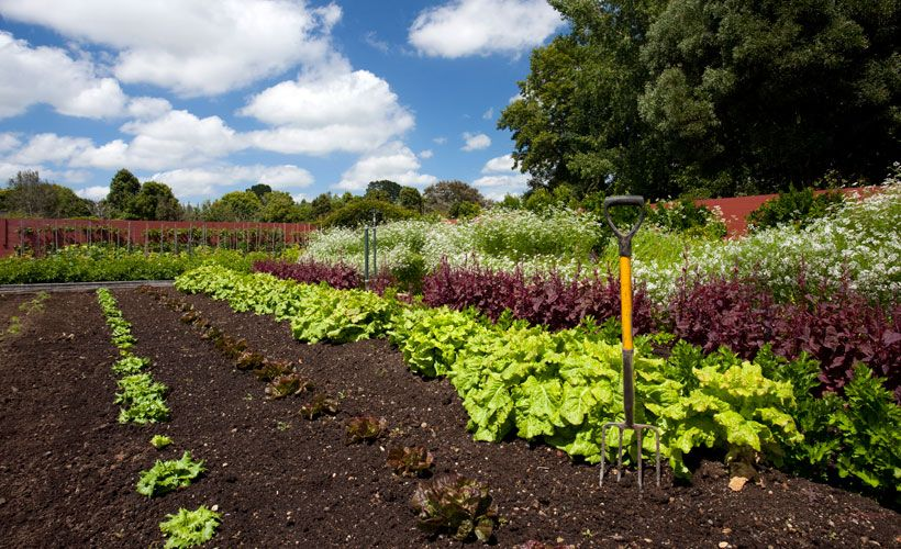 Use this handy gardening planting guide to know when to plant your vegetables and when they can be harvested.