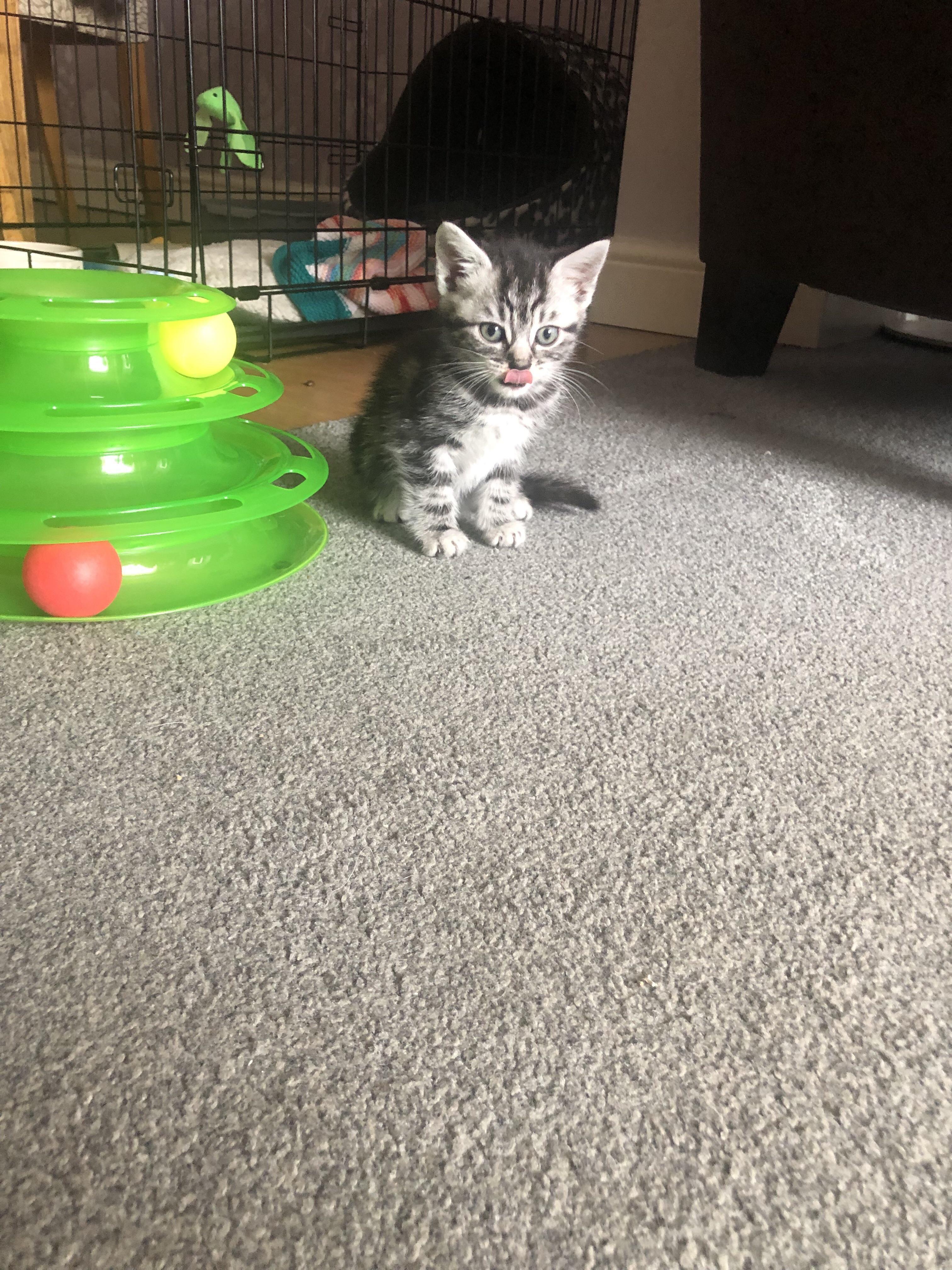 Tiny Kittens First Blep Cat Allergies Tiny Kitten Kittens