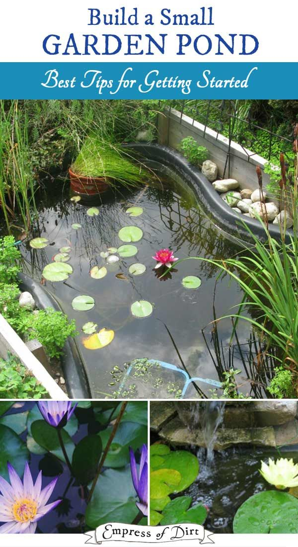 Best Tips For Starting A Small Garden Pond Ponds For Small Gardens Pool Landscaping Water Garden