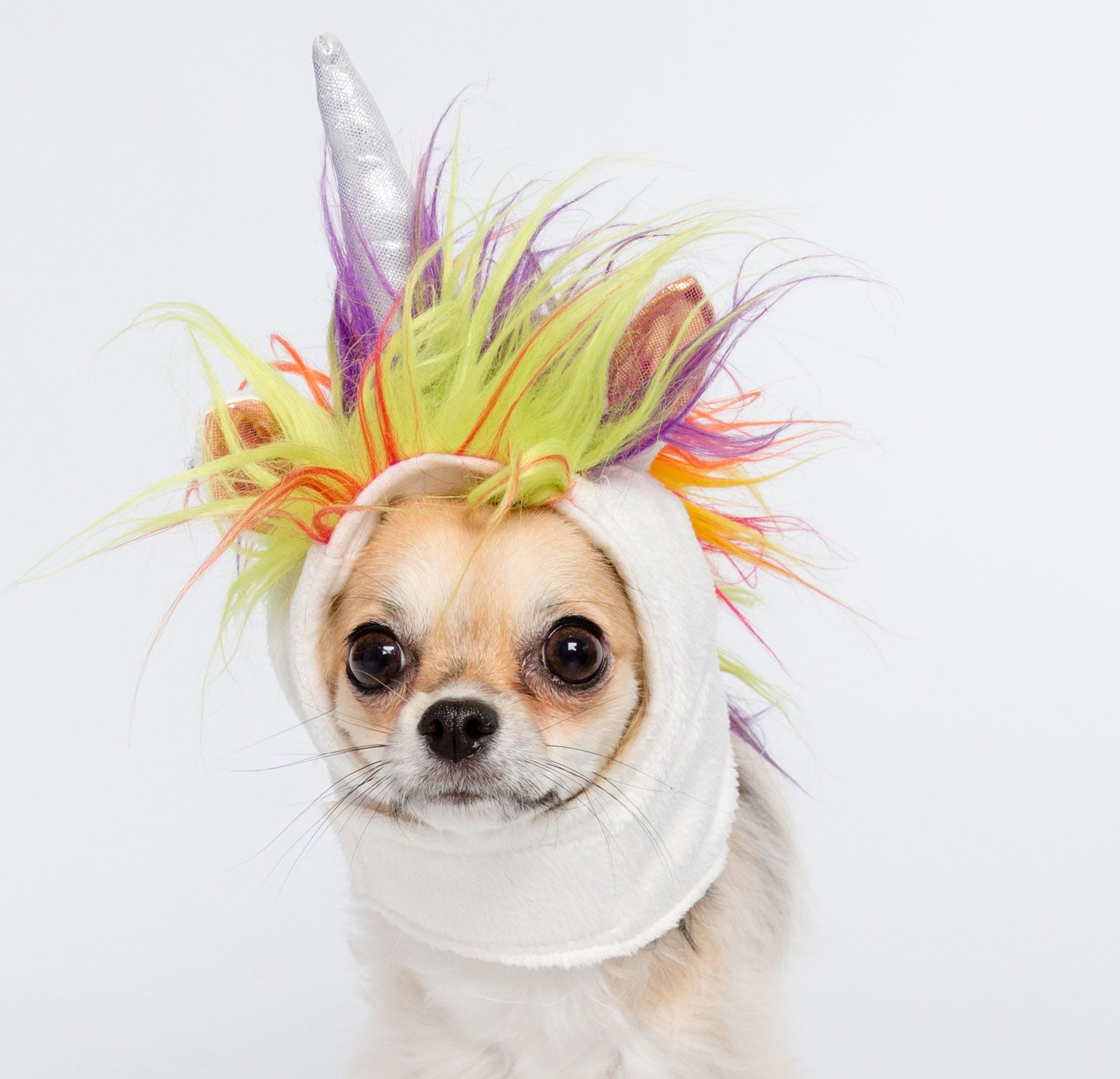 f1616b30b590c Win a FREE unicorn costume for your cat or dog! Sign up for our weekly  contest.