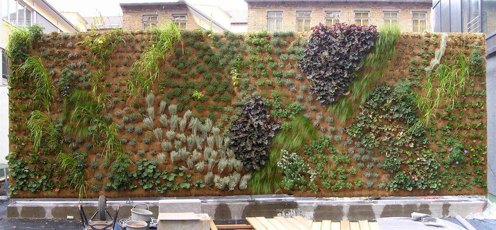 Wandbegrünung vertiko gmbh wandbegrünung living walls vertikale gärten