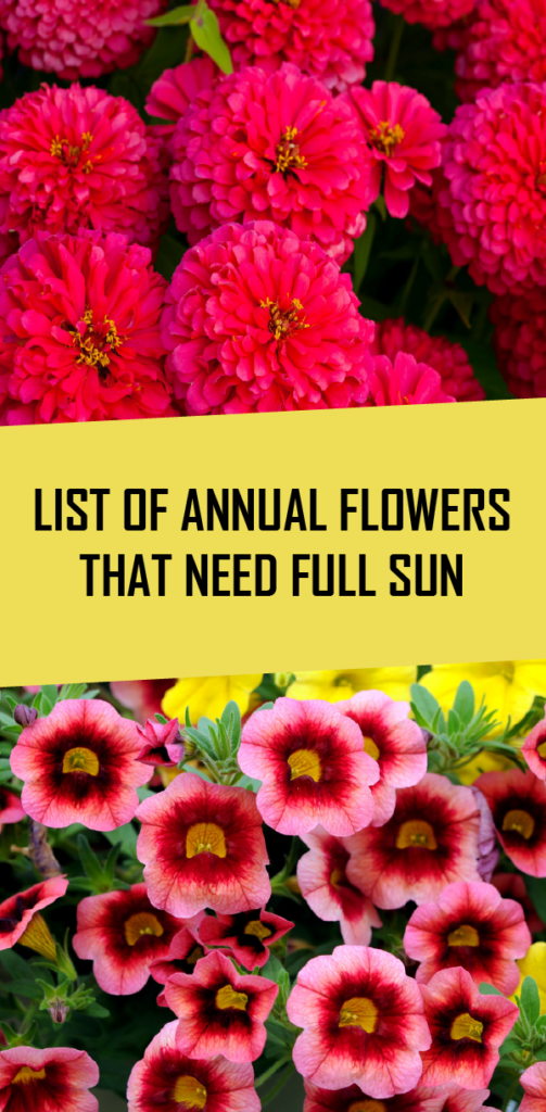 List Of Annual Flowers That Need Full Sun