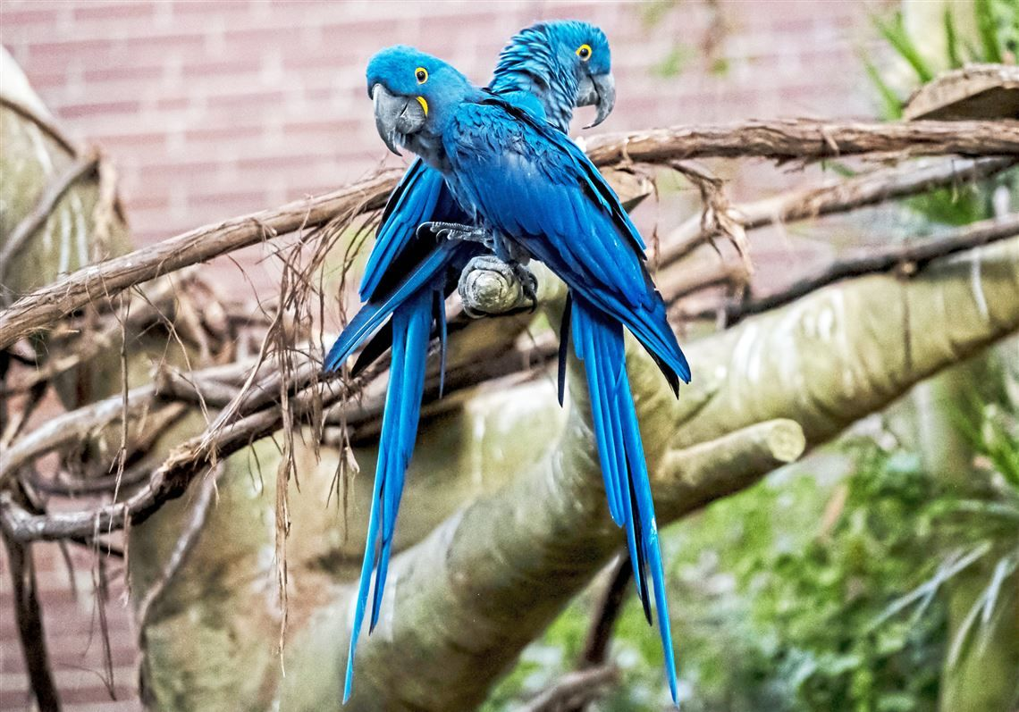 Events With Parrots Cats And Chimps In 2020 Cats Chimp Animal Rescue