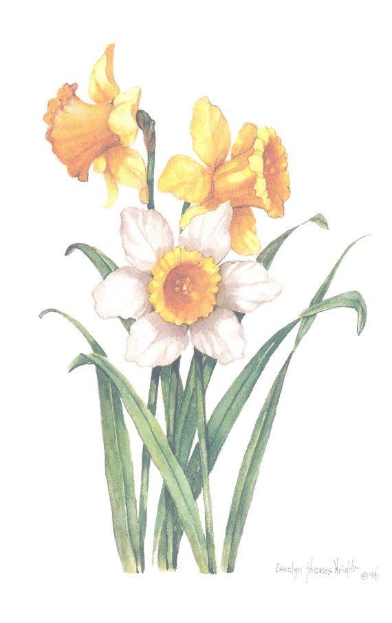 Lithographie De Jonquilles 10 X 8 En 2020 Art Floral Peinture