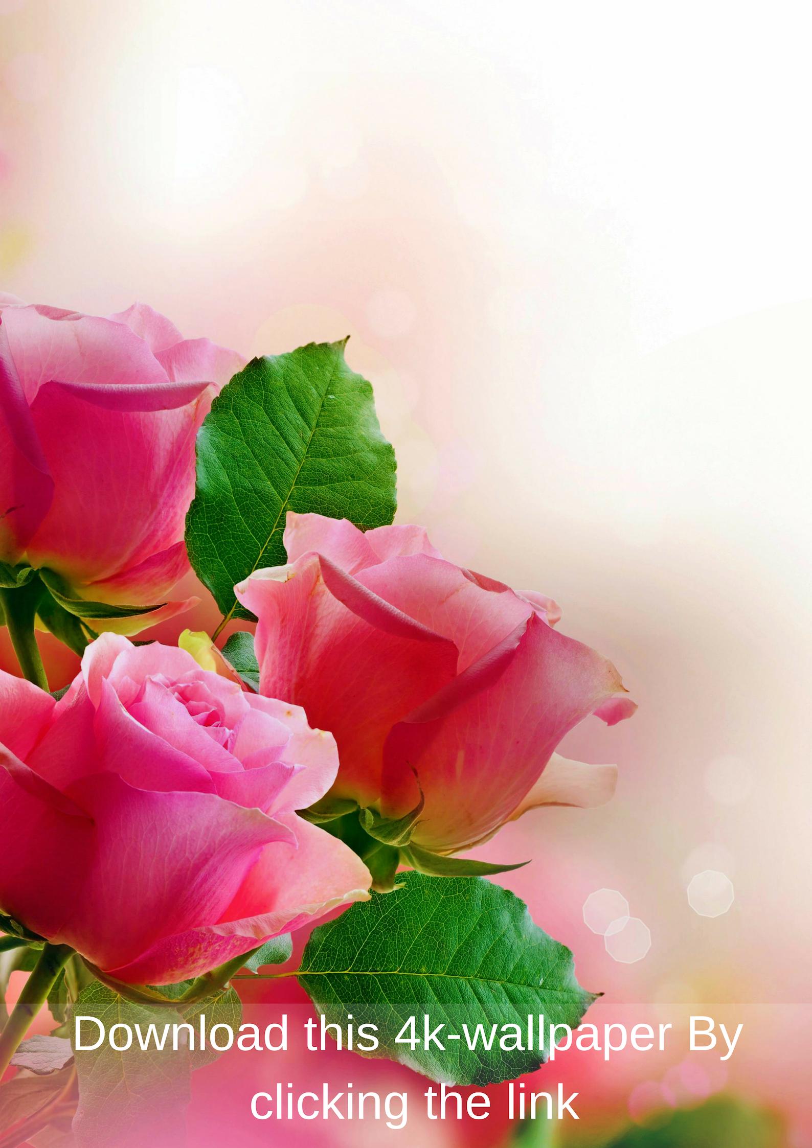 4k Mobile Wallpaper Free Download 10 Beautiful Flowers Wallpapers Flower Wallpaper Pink Roses Background