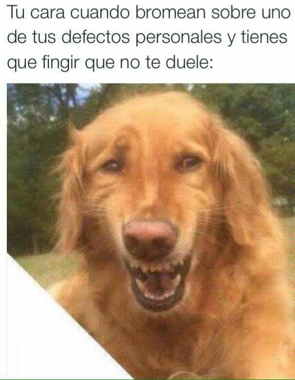 Pin By Kelly Chavez On Imagenes Animales Silly Memes Funny Animal Memes Never Not Funny