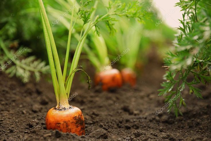 Fotos aus biologischem Anbau #organic #farming #photos, Fotos aus dem ökologischen Landbau …   – Logo