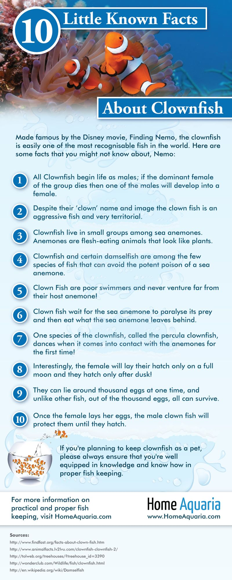 Did you know despite the 39 clown 39 in their name clown fish for Facts about fishing