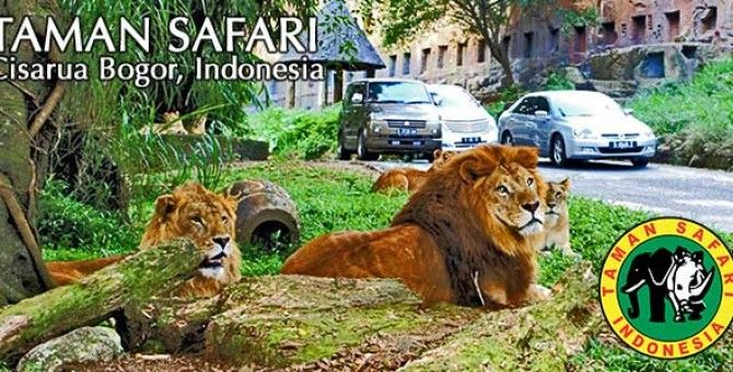 Video Kebun Binatang Taman Safari
