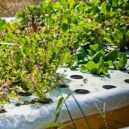 20 Mil Dura Skrim Reinforced Plastic Sheeting Americover Aquaponics Aquaponic Gardening Aquaponics Diy