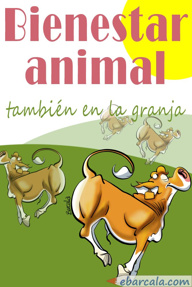 Bienestar animal. #Animal #wellfare. Terneros rubios gallegos radiantes de felicidad. Happy #cows!!