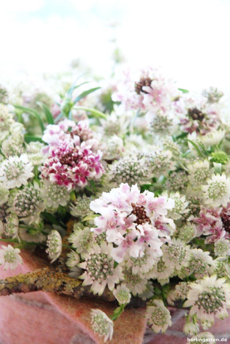 Wachsblumen herstellen bzw Blumen mit Kerzenwachs t