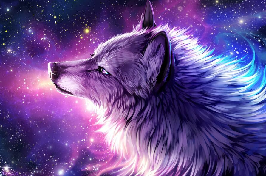 Wallpaper Galaxy Cute Anime She Wolf Wolf Wallpapershit