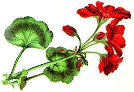 Image Result For Spring Flowers Clip Art Border Desain Pinterest