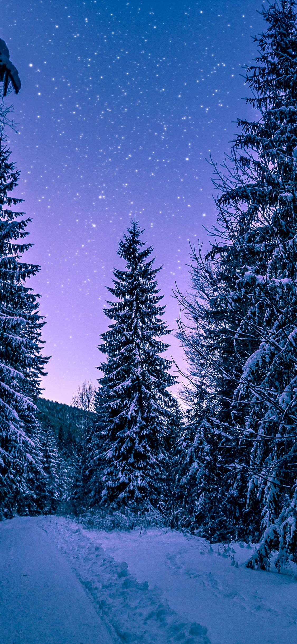 iPhoneX wallpaper nx97snowwinterwoodtreeroadnight