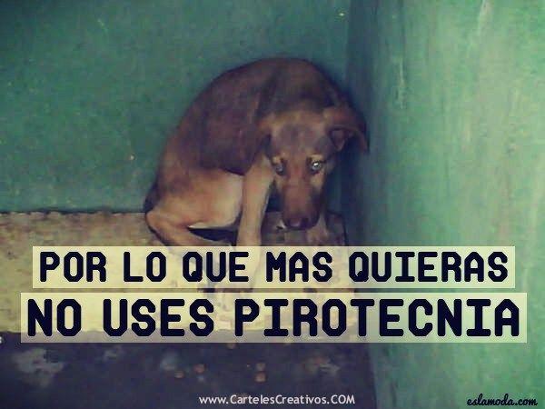 No A La Pirotecnia Por Lo Que Mas Quieras No Uses Juegos Pirotecnicos O Polvora No A La Pirotecnia Cartelescreativo Mascotas Mascotas Frases Amor De Perro
