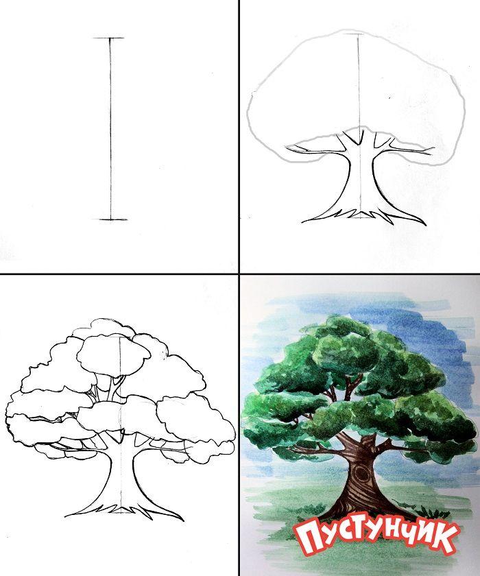 картинки как рисовать дуб ашкеназы придут даже