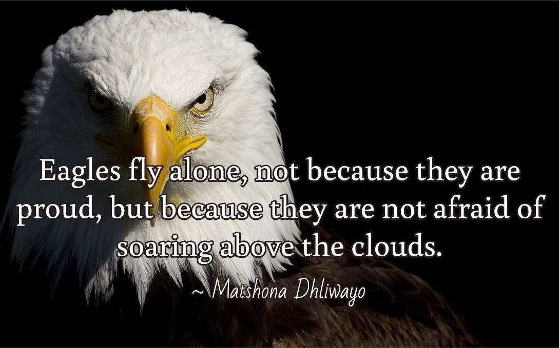 Eagles fly alone, not because they are proud, but because they are