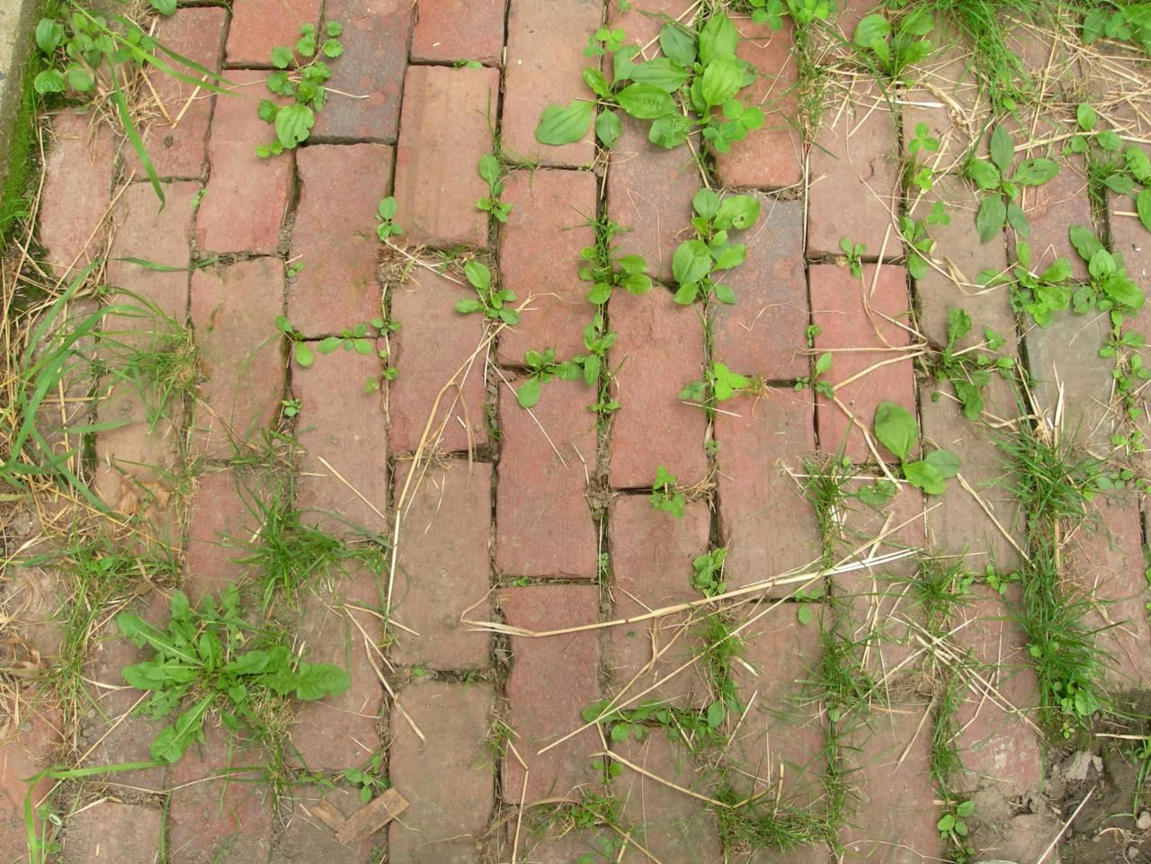 Make Your Own Natural Weed Killer   Garden weeds, Weed killers and ...