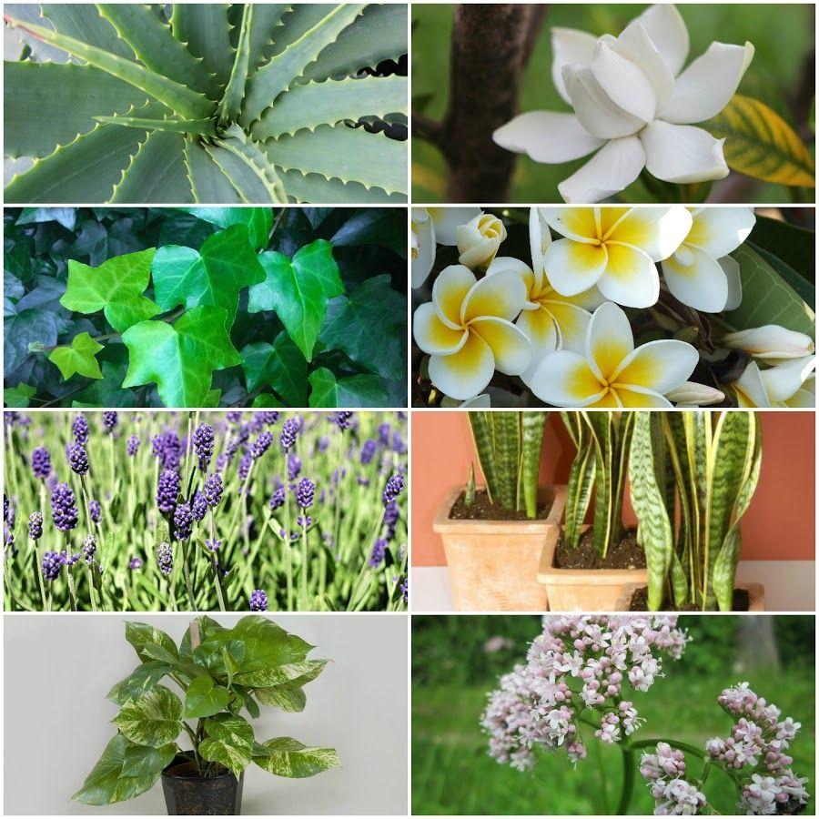 8 plantas a colocar en nuestras habitaciones para acabar for Plantas en la pared